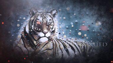 Colorful Animal Paintings - 2019 New Art Design from Art in Bulk